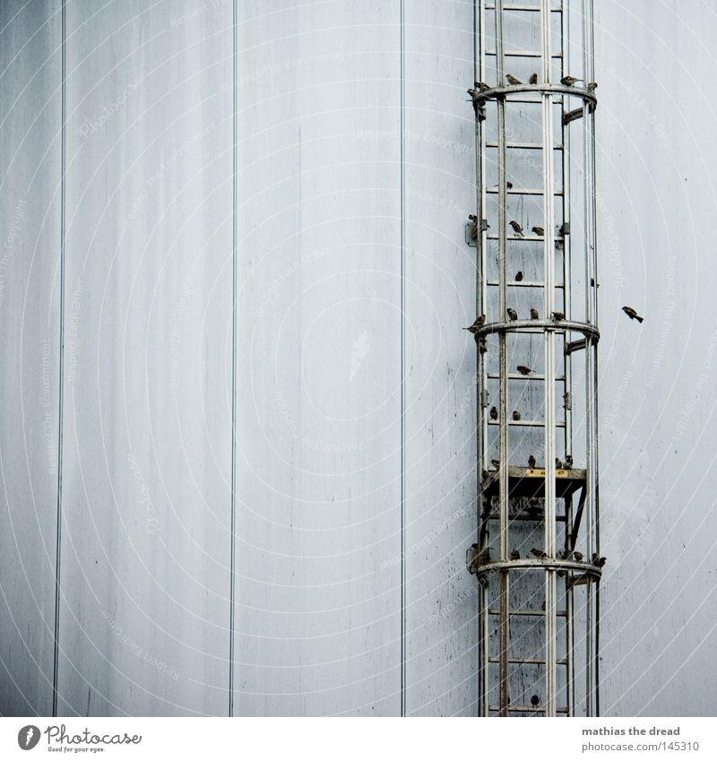VOGELTREFFPUNKT Vogel Sammelstelle Sammlung warten Versammlung Herde Vogelschwarm Spatz Flügel fliegen Aufenthalt Schutz Langeweile Strebe Leiter Feuerleiter