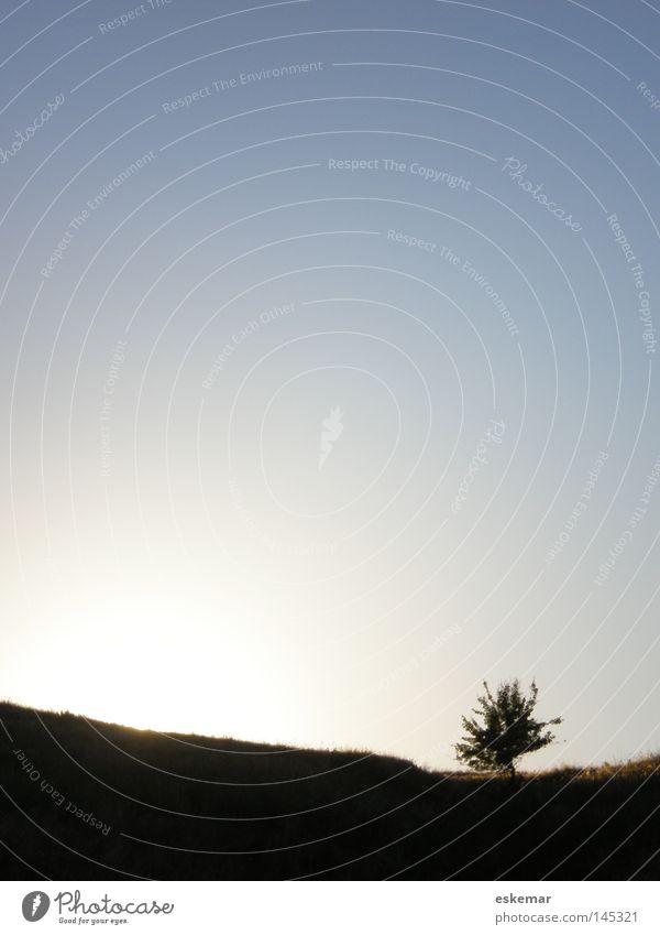 Unikat Baum Single Einsamkeit Landschaft Landschaftsformen Wiese Sommer Abend Sonnenuntergang einzeln Himmel Schönes Wetter Composing Linie Deutschland Europa