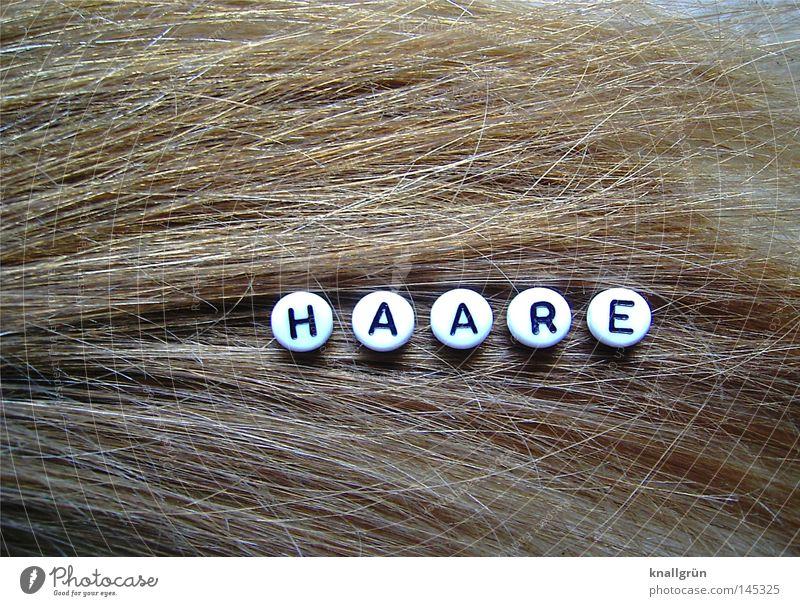 HAARE Wort Buchstaben rund schwarz weiß braun schimmern Haare & Frisuren Reflexion & Spiegelung obskur Schriftzeichen Perle Dunkelblond Letter