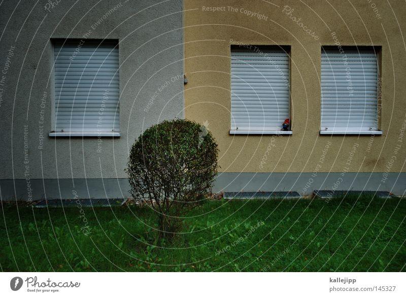 grenzwertig Fenster Nachbar Haus Mehrfamilienhaus Wand Miete Mieter Häusliches Leben schlafen Morgen aufstehen Nachtruhe Sträucher Vorgarten Garten Gartenbau
