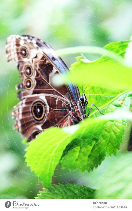 blau auf grün zum 3. Natur Pflanze Tier Frühling Sommer Schönes Wetter Baum Blatt Garten Park Wiese Wildtier Schmetterling Tiergesicht Flügel