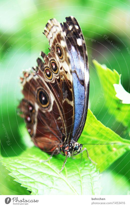 blau auf grün zum 2. Natur Pflanze Tier Frühling Sommer Schönes Wetter Baum Blatt Garten Park Wiese Wildtier Schmetterling Tiergesicht Flügel