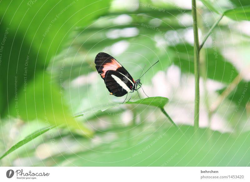 siehst du mich? Natur Pflanze grün schön Sommer Baum Erholung Blatt Tier Frühling Wiese klein Garten außergewöhnlich fliegen Park