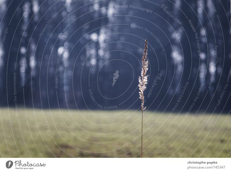 Der letzte Strohhalm Gedeckte Farben Außenaufnahme Textfreiraum links Morgendämmerung Tag Dämmerung Gegenlicht Schwache Tiefenschärfe Zentralperspektive Natur