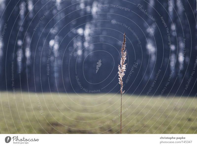 Der letzte Strohhalm Natur Pflanze Einsamkeit Wald Herbst Gras Traurigkeit Landschaft Feld frei Hoffnung ästhetisch retro Spaziergang einfach