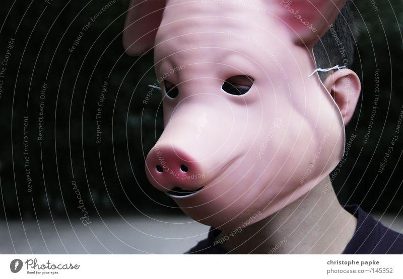 Sau rausgelassen Schwein Maske verstecken Karneval Schwein gehabt anstößig versaut dreckig Rüssel Auge Mensch verkleiden verkleidet lustig obskur Säugetier