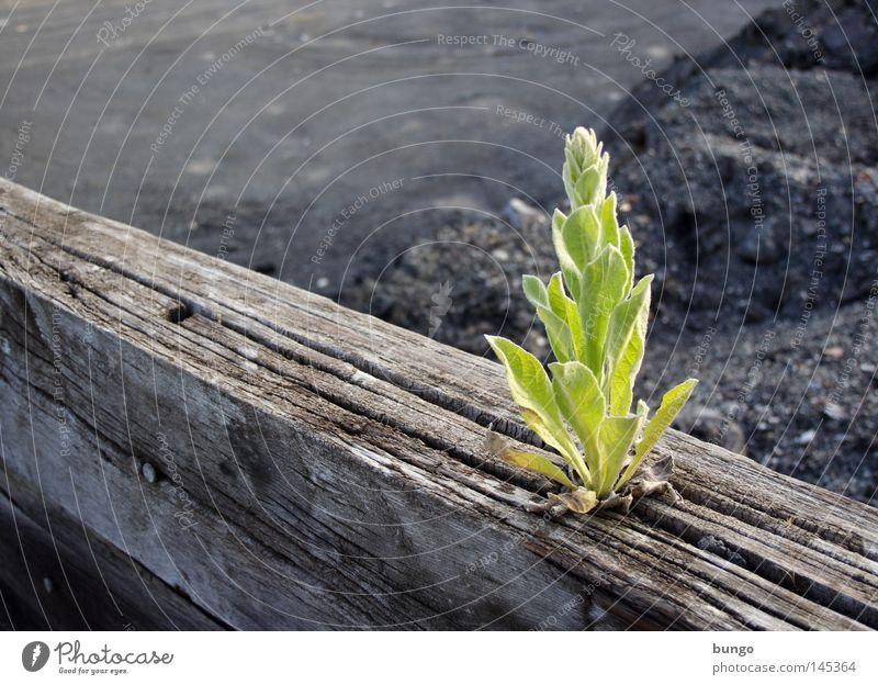 erupta grün Pflanze Blatt Einsamkeit Berge u. Gebirge Frühling Holz Zufriedenheit Kraft Lebensmittel Kraft Hoffnung Wachstum außergewöhnlich stark brechen