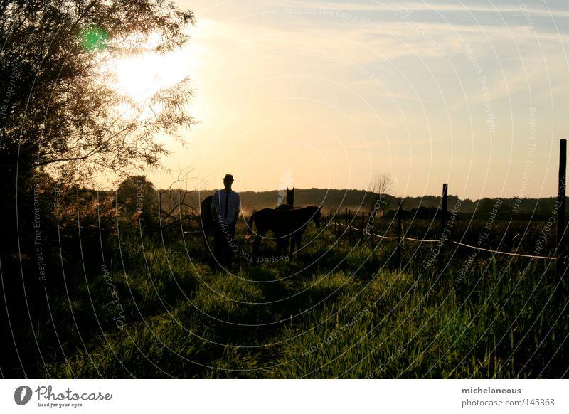 Gentlemen in natürlicher Umgebung. Sonne Pferd Wiese Weide Zaun Horizont Physik Sehnsucht Landschaft Landschaftsformen Baum Hemd Hut Krawatte Kavalier grün Gras