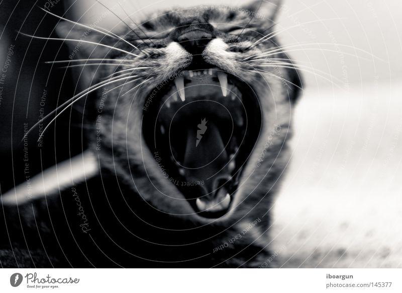 Louis der Wilde Katze Tier Haare & Frisuren Wildtier liegen Fell Geruch Haustier Säugetier Schnurrhaar Stofftiere gähnen Miau Raubkatze Neunziger Jahre