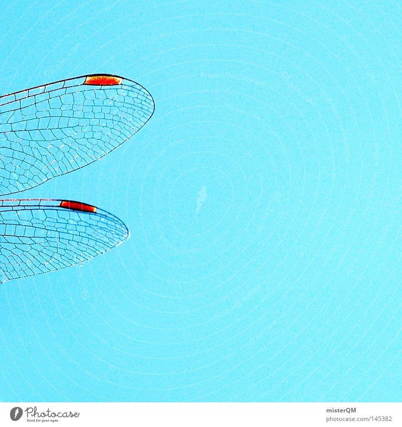 Libelle an Himmel. Flügel dünn Natur Tier fliegen Makroaufnahme Nahaufnahme blau Insekt Lebewesen Netz Strukturen & Formen Ordnung rot Muster maskulin glänzend