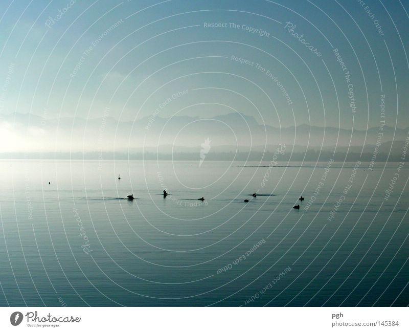 Grenzenlos II Ente Vogel Sonnenuntergang Starnberger See Stimmung Wasser Himmel blau Nebel Berge u. Gebirge Glätte ruhig Frieden friedlich