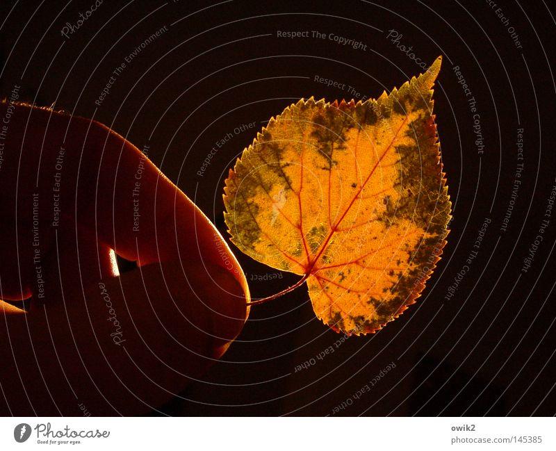 Waldstück Hand Finger Umwelt Natur Pflanze Herbst Blatt festhalten verblüht dehydrieren grün rot Verfall Vergänglichkeit Laubbaum Linde Lindenblatt Botanik