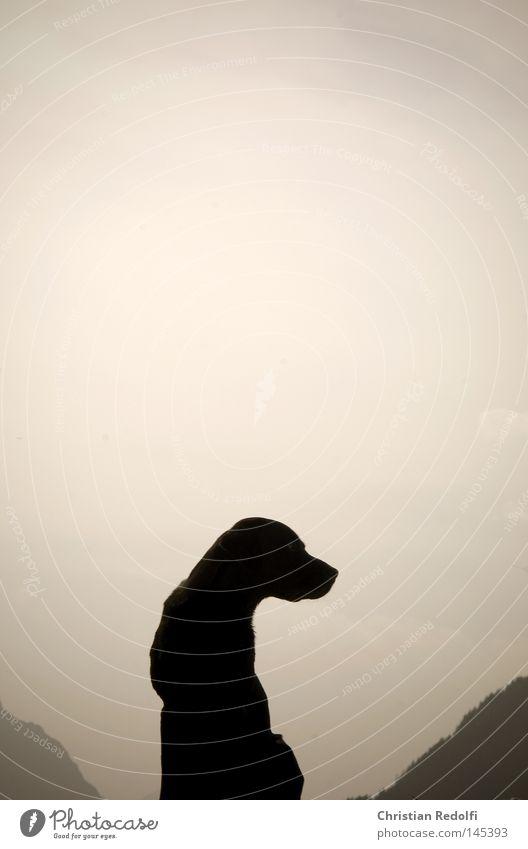 hund sucht... Himmel Hund blau weiß grün Sonne Tier Wolken schwarz Landschaft Wiese Berge u. Gebirge Gras Feld sitzen Seil