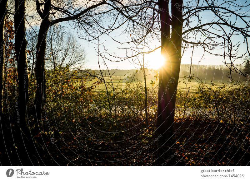 Sonnenfarben Umwelt Natur Landschaft Tier Himmel Wolken Horizont Herbst Winter Klima Klimawandel Schönes Wetter Nebel Baum Grünpflanze blau mehrfarbig gelb gold