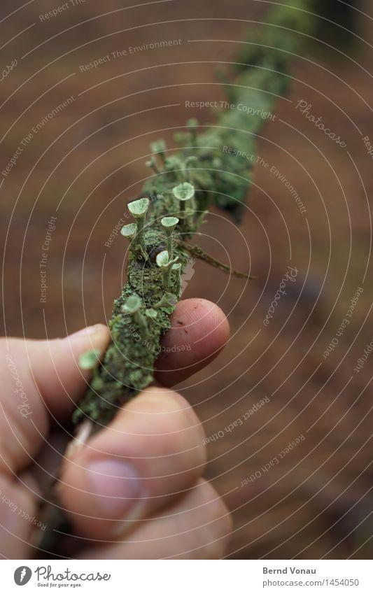 grüngut maskulin Hand Umwelt Natur Pflanze Pilz klein Wachstum Subkultur Schmarotzer haltend Ast Trompete aufstrebend niedlich Moos grau Farbfoto Außenaufnahme