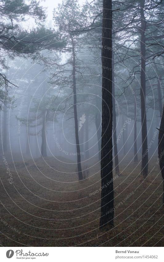 stamm Umwelt Natur Landschaft Pflanze Baum Gras Wald Hügel Gefühle Stimmung ruhig grau braun grün Kiefer Nebel Dunst Herbst Spaziergang trüb Farbfoto