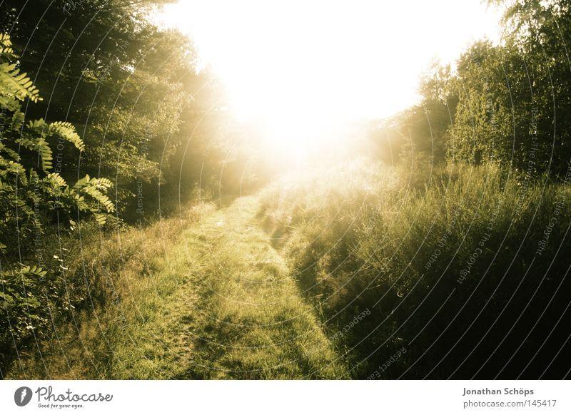 Pfad in der Natur mit Sonne als Gegenlicht als Lichterscheinung harmonisch Sommer Pflanze Baum Gras Sträucher Wiese Wege & Pfade bedrohlich hell gelb grün Kraft