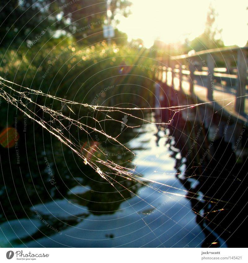Spinnen am See Zufriedenheit Erholung Freiheit Sommerurlaub Natur Wasser Netz Stimmung Geborgenheit Weisheit Ewigkeit Frieden Steg Schilfrohr wellig Spinnennetz