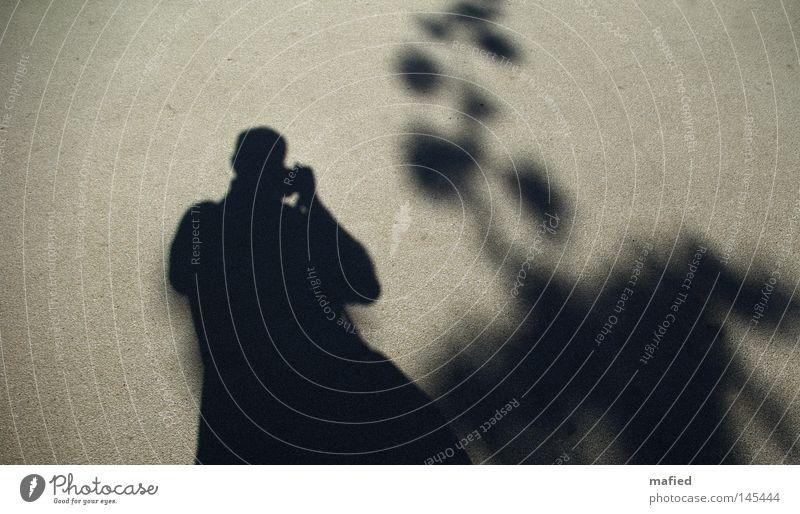 Schattendasein [HH 08.3] Mensch Baum schwarz grau Fotografie Ordnung Asphalt Verkehrswege Fotografieren Selbstportrait beige