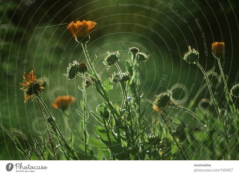 Morgentau schmückt den Herbst Natur grün schön Blume Farbe Herbst Gefühle Blüte Erde wild frisch Wassertropfen Boden Tropfen einfach Schutz
