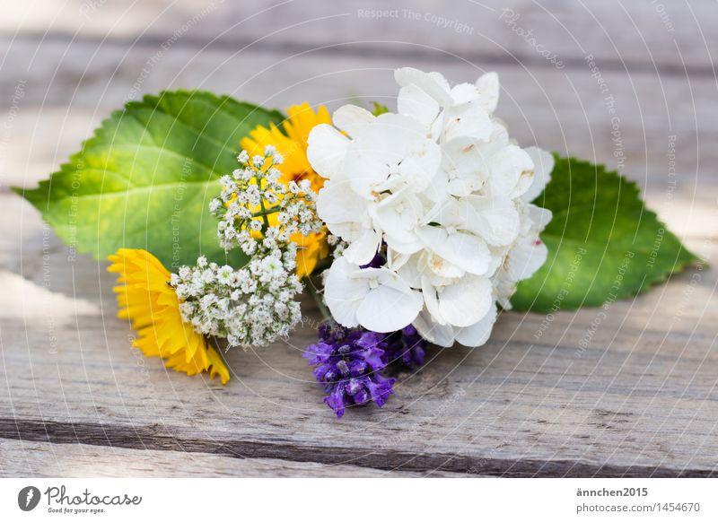 Kleiner Blumengruß harmonisch Erholung ruhig Natur Pflanze Frühling Sommer Blatt Blüte Garten Duft entdecken gelb grün violett weiß Glück Romantik schön