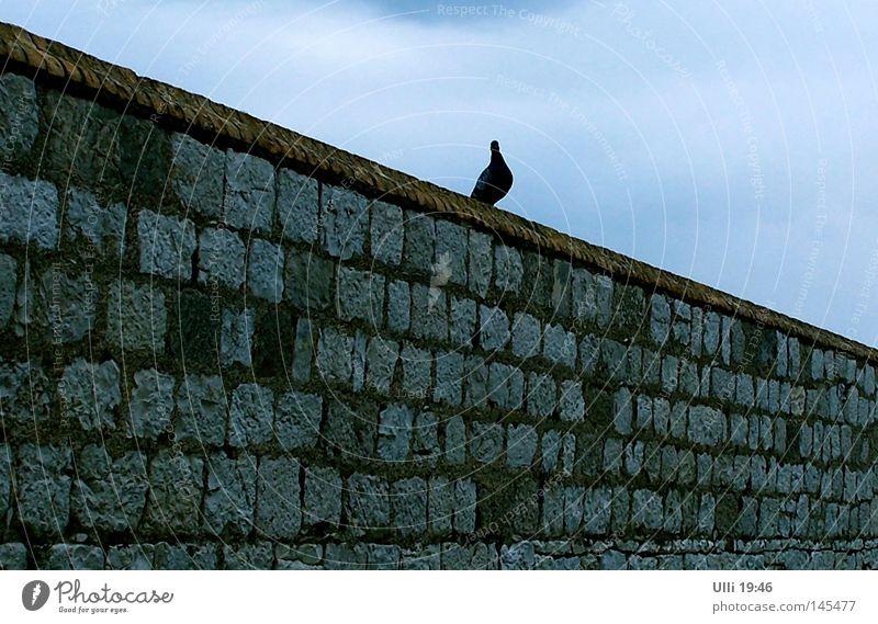 Möwe.....ähhh.....Taube! Himmel Tier Wand Mauer Stein Vogel diagonal Steinmauer Fluchtlinie Vor hellem Hintergrund