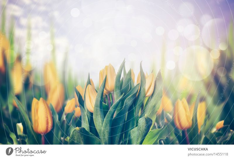 Frühling Tulpen Stil Design Sommer Garten Feste & Feiern Natur Pflanze Blume Blüte Park Blumenstrauß Blühend gelb April Hintergrundbild Tulpenfeld Tulpenblüte