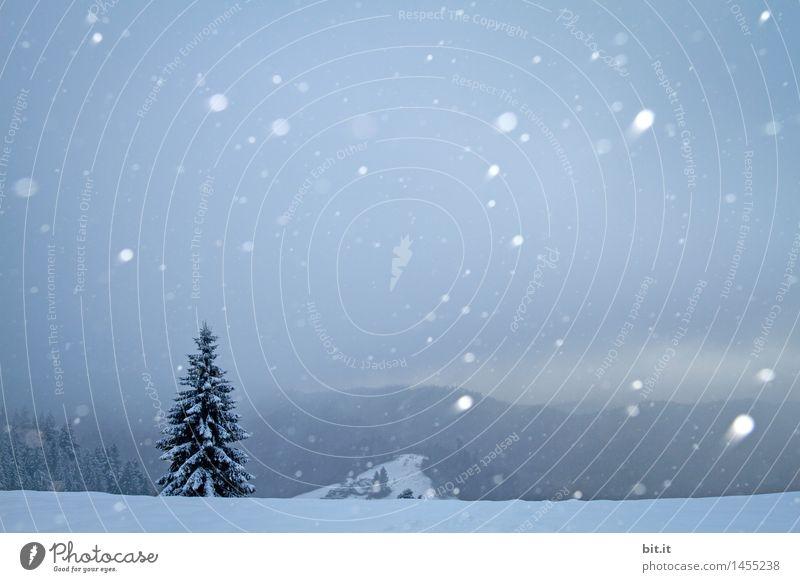 oh Tannenbaum Umwelt Natur Winter Eis Frost Schnee Schneefall Berge u. Gebirge Stimmung Weihnachtsbaum Winterstimmung Winterurlaub Wintertag Farbfoto