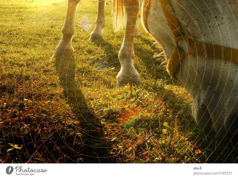 hauspferd Natur grün schön Sonne Tier Wolken Wiese Spielen Freiheit Glück Beleuchtung braun Kraft Wind glänzend Freizeit & Hobby