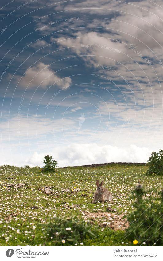 Osterhasi Natur Pflanze Sommer Landschaft Blume Tier Frühling Wiese Gras Glück Idylle laufen Blühend Lebensfreude Freundlichkeit Neugier