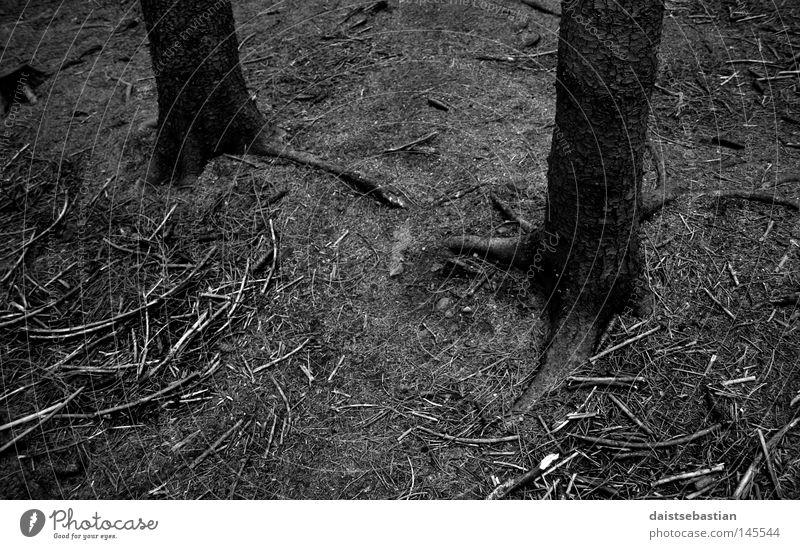 skogdød Baum Tod Ast Baumrinde Wurzel Waldboden