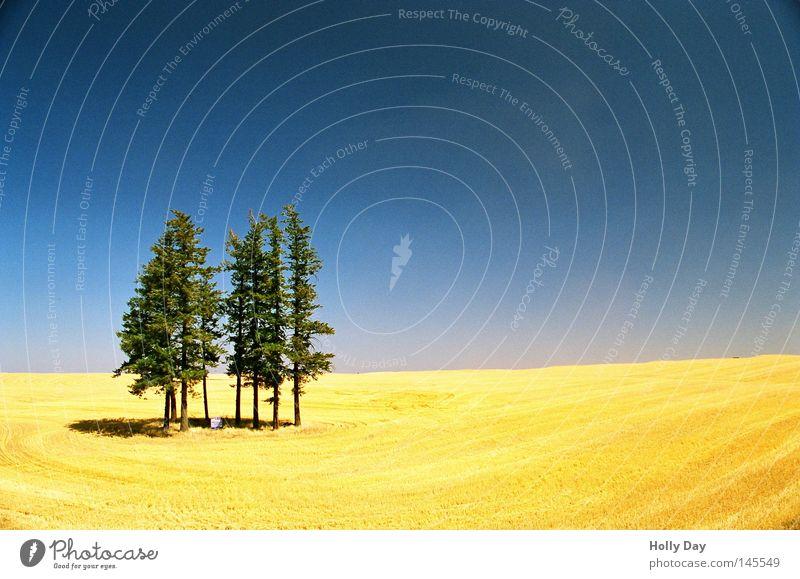 Feld, Wald und Himmel Baum Pol- Filter blau Schönes Wetter Ernte gelb goldgelb grün vertikal Muster Horizont Schatten Sommer Weizenfeld schön Ferne
