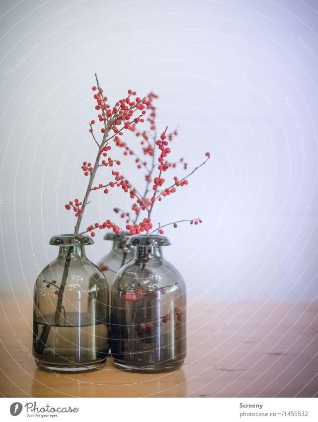 Drei Vase Dekoration & Verzierung Sträucher Beerensträucher Holz Glas ästhetisch grau rot Stillleben Farbfoto Innenaufnahme Menschenleer Kunstlicht