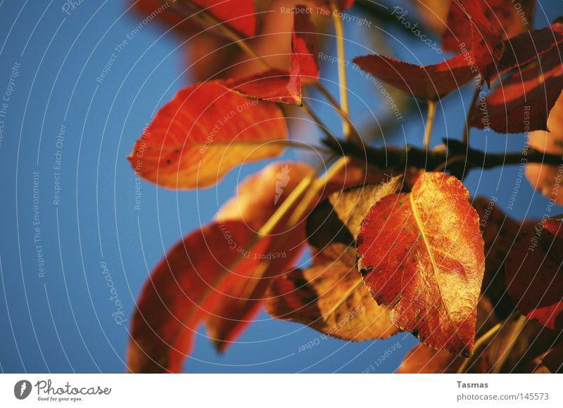 Golden Farbe Baum rot Blatt Farbstoff Herbst glänzend Ast niedlich Geäst Zweige u. Äste