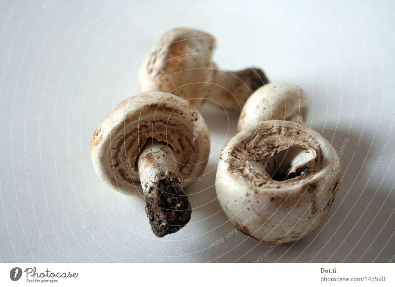 Cityschwammerl Champignons Pilz 4 Stengel Ernährung essbar Bioprodukte biologisch Suche finden Rohstoffe & Kraftstoffe Souvenir roh Abendessen Lebensmittel