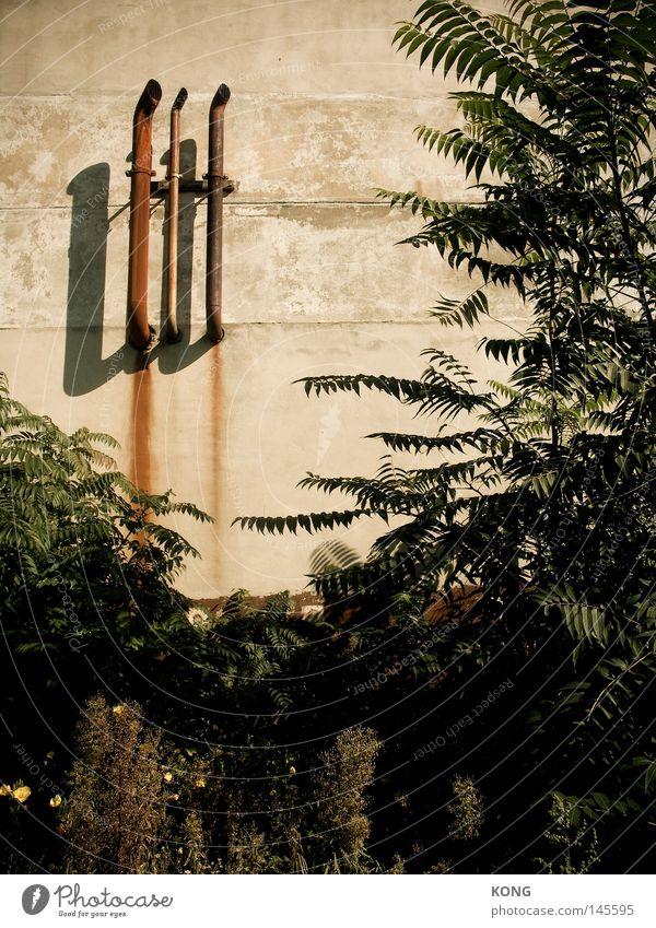 künstliche beatmung Baum grün Pflanze Wand Luft Beton Industrie Wachstum Sträucher Klima Röhren obskur Rost Eisenrohr atmen Auspuff