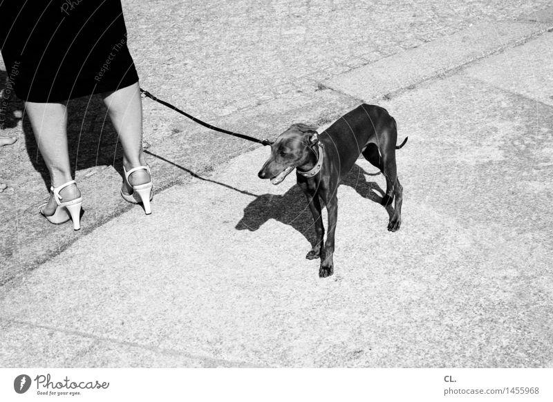 nicht carlson Mensch Frau Hund Sommer Tier Erwachsene Straße Leben Wege & Pfade feminin Stil Beine Lifestyle Mode Freizeit & Hobby stehen