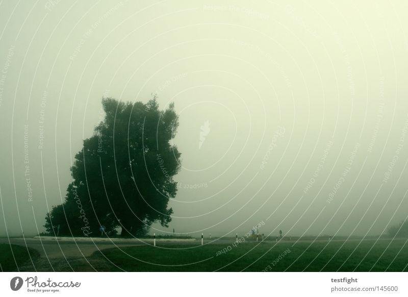 indian summer Baum grün Straße dunkel Herbst grau Nebel unterwegs September Kreisverkehr