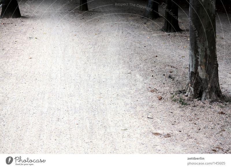 Tiergarten Baum Wege & Pfade Park Sand wandern Erde verfallen Fußweg Baumstamm Kies Joggen Kieselsteine Biotop Jogger Fahrradweg Tiergarten