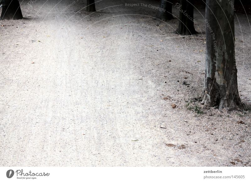 Tiergarten Park Biotop Baum Baumstamm Wege & Pfade Fahrradweg Fußweg wandern Joggen Jogger Kies Kieselsteine verfallen Erde Sand tierarten grüne lunge