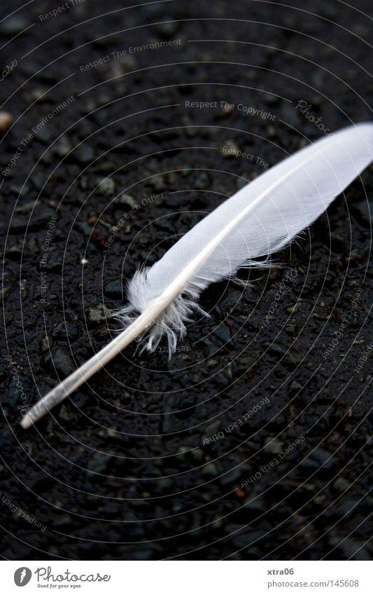 die feder Feder Boden Asphalt weiß Kontrast leicht Vogel zart sanft