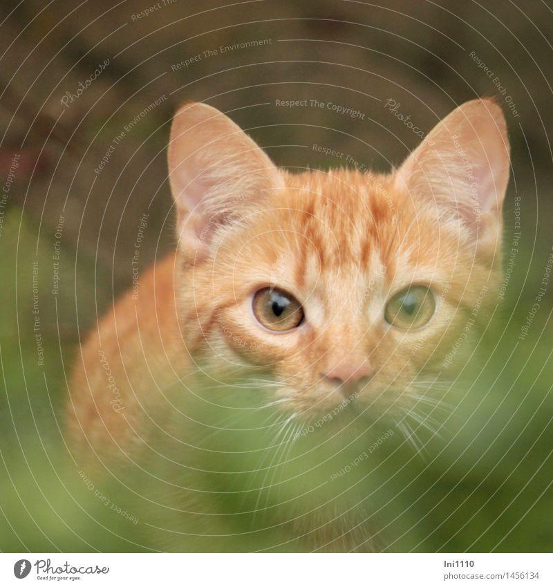 roter Kater Katze Natur grün weiß Tier schwarz natürlich Spielen Garten braun springen orange beobachten niedlich Fell Wachsamkeit
