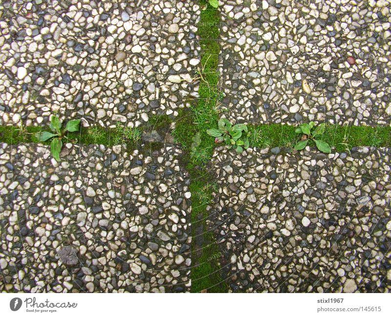 mooskreuz Moos Gras grün Kruzifix Kreuz Christliches Kreuz Beton Religion & Glaube Katholizismus grau Kieselsteine Bürgersteig Dinge
