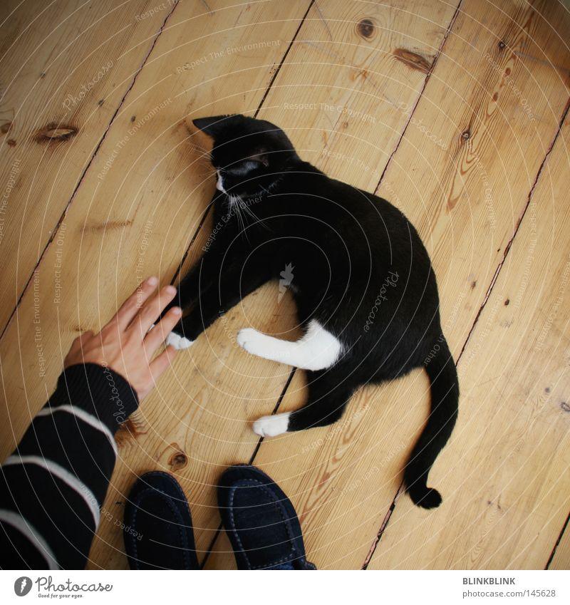 mish mush Hand weiß Freude schwarz Tier Spielen Katze Fuß Wohnung Tierfuß liegen süß Bodenbelag Streifen Ohr Ohr