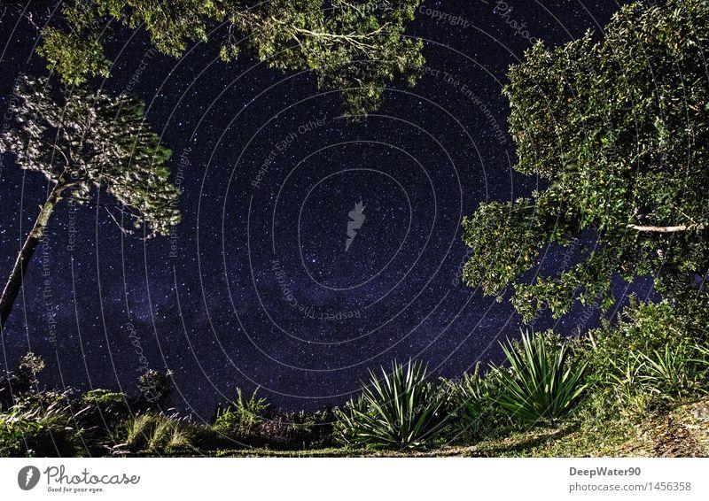 Night over Chamarel Umwelt Natur Erde Luft Himmel Wolkenloser Himmel Nachthimmel Stern Sommer Schönes Wetter Pflanze Baum Gras Sträucher Moos Blatt Grünpflanze