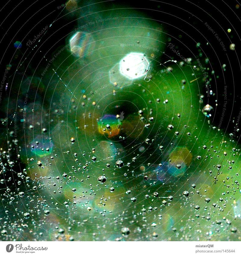 Trail of Dead. schön Natur Wasser Wassertropfen Regen Tropfen hängen außergewöhnlich fest Unendlichkeit kalt klein Tod Farbe Zeit spritzen Regenbogen Farbstoff