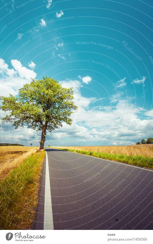 Bin ich zu früh? Umwelt Natur Landschaft Pflanze Himmel Wolken Wetter Schönes Wetter Baum Wiese Feld Verkehr Verkehrswege Straße Wege & Pfade ästhetisch