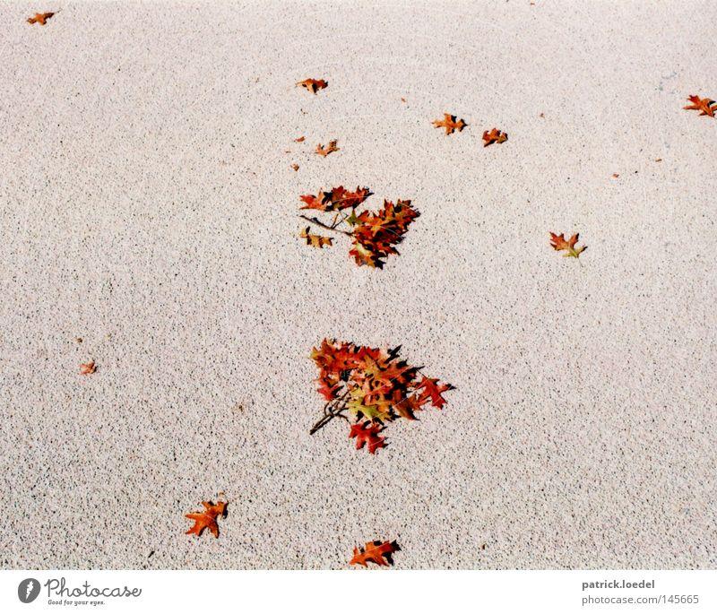 [HH08.3] Herbstzerstreuung rot Blatt Herbst Tod grau Stein Trauer Boden Asphalt fallen Geäst Oktober Zweige u. Äste September Indian Summer Sensenmann