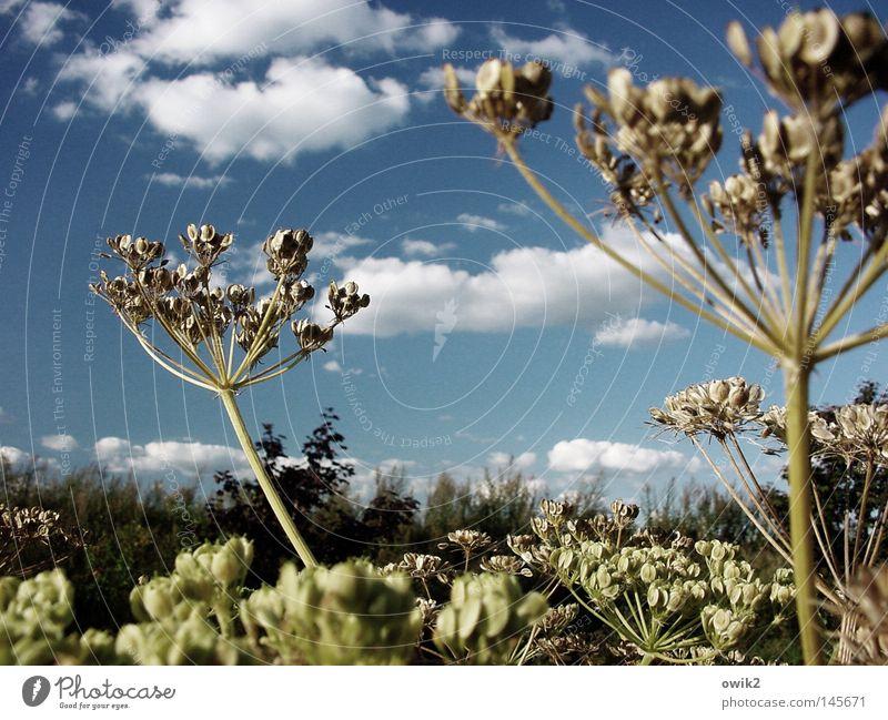 Später Sommer schön Umwelt Natur Landschaft Pflanze Tier Luft Himmel Wolken Horizont Herbst Klima Schönes Wetter Wildpflanze Wiese Bewegung schaukeln verblüht