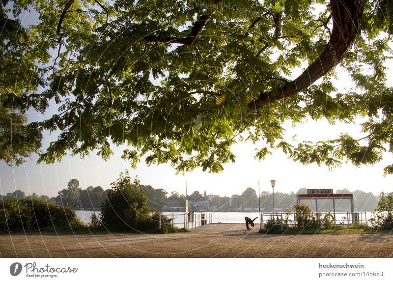 Frühsport ruhig Sonne Joggen Natur Wasser Baum Blatt Park Seeufer Flussufer friedlich Frieden Eiche Dehnübung dehnen Physis eine Person Außenaufnahme Morgen